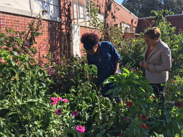 Dr. Wilson checks out the school garden at White Station High School in Tennessee.
