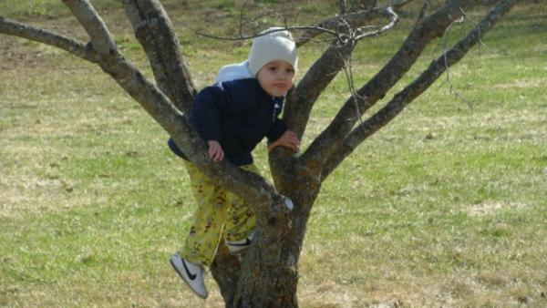 Tree Climbing: White Earth Reservation Gets Moving Outside