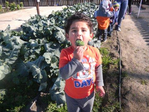 Garden Tending: Colusa Indian Community Hand-in-Hand Garden